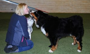 Dette kurset er for deg som ønsker å lære hunden ferdigheter som er nyttige i hverdagen. Kurset en naturlig videreføring av unghundkurset, men det er åpent for alle hunder over 2 år – enten du har gått valpekurs eller unghundkurs, eller om det er første gangen du skal på kurs. Vi har stort fokus på å tilpasse treningen og øvelsene […]